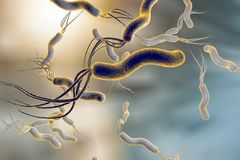Helicobacter pylori, bacterium which causes gastric and duodenal ulcer Stock Image
