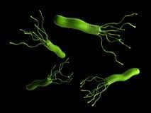 Helicobacterpyloris - sluit omhoog stock illustratie