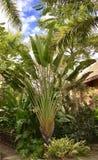 Heliconia royalty-vrije stock afbeeldingen