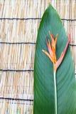 在木桌布的Heliconia花 免版税库存照片