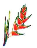 Heliconia-Aquarellillustration stock abbildung