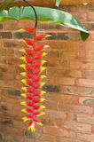 Heliconia. Stock Photo