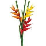 Heliconia-Blumenblumenstrauß lizenzfreie abbildung
