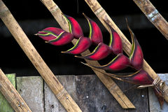 Heliconia flower decorated bamboo hut. Amazonia, Ecuador Royalty Free Stock Photo