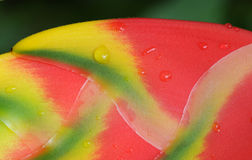 Heliconia flower. Macro. Royalty Free Stock Images