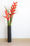 heliconia flower Stock Photos