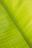 Heliconia Leaf Royalty Free Stock Images
