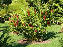 Heliconia and palm Stock Photos