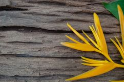 Heliconia-` s glatter Plan steht auf einem alten hölzernen Brett mit einem natürlichen grünen Hintergrund still Lizenzfreie Stockfotos