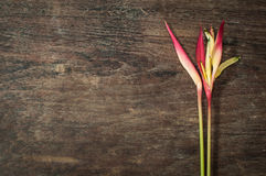 Heliconia : Thai flower. Heliconia and leaf  on wood table Royalty Free Stock Photos