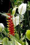 Heliconia und Friedensblumen in einem üppigen Dschungelgarten lizenzfreies stockfoto