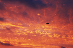 Helicopter Flies Through a Red Sunset Royalty Free Stock Photos