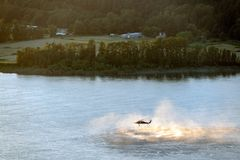 Helicopter rescue training operation on the Columbia river, Oregon. royalty free stock photos