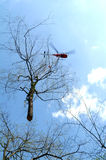 Helicopter transporting a tree. Helicopter transporting a cuted tree Stock Photography