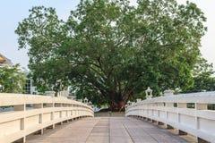 Heliga träd och broar Royaltyfri Foto