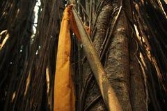 Heligt ställe för Banyan Royaltyfri Foto