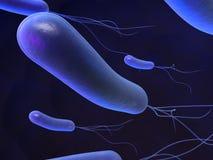 heliobacter 免版税库存图片