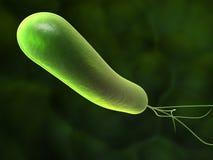 Heliobacter Stock Photography