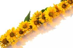Heliopsis Royalty Free Stock Photos