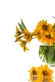 Heliopsis Stock Photo