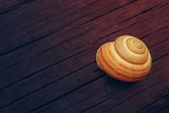 Helix pomatia, Burgundy, Roman, edible snail on a dark wooden ba Stock Photography