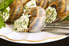Helix pomatia with parsley and dill. French cuisine Royalty Free Stock Photos