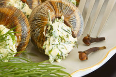 Helix pomatia with parsley and dill. Royalty Free Stock Photography