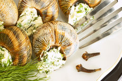 Helix pomatia with parsley and dill. Royalty Free Stock Images