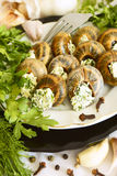 Helix pomatia with parsley and dill. Stock Photos