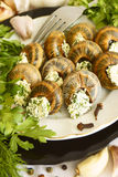 Helix pomatia with parsley and dill. Stock Photo