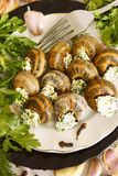 Helix pomatia with parsley and dill. Stock Images