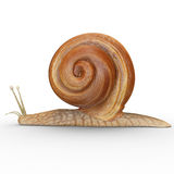 Helix (Snail) Stock Photography