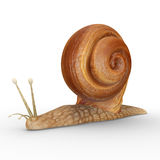 Helix (Snail). Helix is a genus of large air-breathing land snails, terrestrial pulmonate gastropod molluscs Royalty Free Stock Image