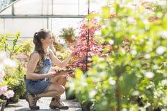 Hellångt av undersökande växter för kvinnlig arbetsledare utanför växthus Royaltyfria Bilder