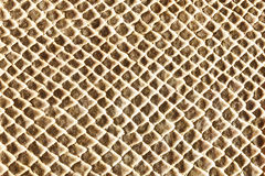 Hell beige snakeskin texture Royalty Free Stock Photography