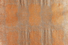 Hell brown snakeskin texture Royalty Free Stock Image