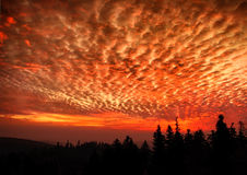 Hell dark red sky landscape with black forest Stock Photography