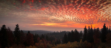 Hell dark red sky landscape with black forest Stock Images