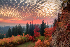 Hell dark red sky landscape with black forest Royalty Free Stock Photography