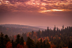 Hell dark red sky landscape with black forest Stock Image