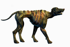 Hell Hound - includes clipping path. 3D render of a Hell Hound - one of the few remaining survivors after a nuclear holocaust Royalty Free Stock Photography