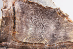Hell's Canyon Herringbone Petrified Wood Royalty Free Stock Images