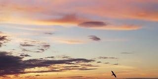 Hell, störend, farbiger Hintergrund Schattenbild eines Vogels auf dem Hintergrund eines bewölkten Himmels des Sonnenuntergangs stockfotos
