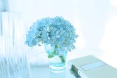 Hellblaue Hortensie Stockfoto