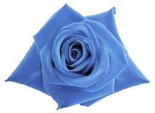 Hellblaue rosafarbene Blume auf Weiß lokalisierte Hintergrund mit Beschneidungspfad Keine Schatten nahaufnahme Lizenzfreie Stockfotos