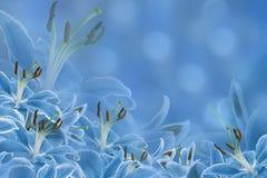 Hellblauer mit Blumenhintergrund Lilienblumen auf einem unscharfen bokeh Hintergrund Tulpen und Winde auf einem weißen Hintergrun Stockbild