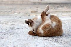 Hellbraune und weiße Farbe des Katzensitzen- und -reinigungspelzes aus den konkreten Grund stockfotografie