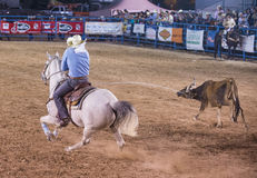 Helldorado days rodeo Stock Photography