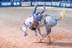 Helldorado days Rodeo. LAS VEGAS - MAY 16 : Cowboy Participating in a Bucking Horse Competition at the Helldorado days Rodeo , A Professional Rodeo held in Las Royalty Free Stock Photo