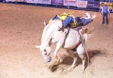 Helldorado days Rodeo Stock Photos